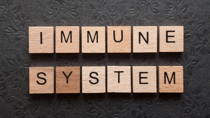 Study centers too much immune lead to autoimmune disease and little lead to infection