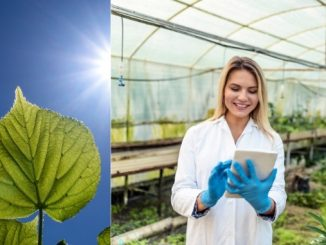 Scientists make use of computers to understand C4 photosynthesis during COVID