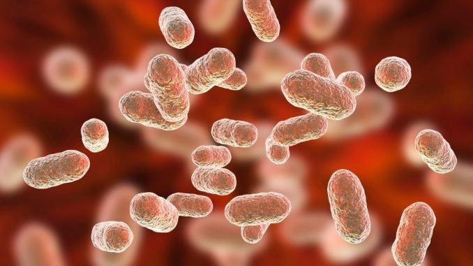 Haemoglobin was invented by a single gene -Vigorcolumn