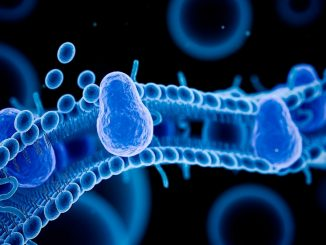 Membrane building blocks play decisive role in controlling cell growth